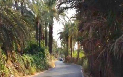 Très négligée, l'ancienne oasis d'El Hamma est menacée de disparition