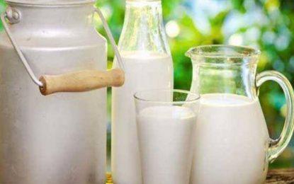 Le Synagri alerte sur un risque de pénurie progressive du lait sur les étals