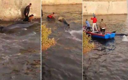 Piégé au port de Bizerte, un cachalot sauvé par des jeunes (Vidéo)
