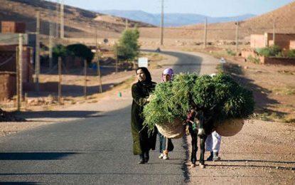 À monsieur Habib Jemli… l'agronome