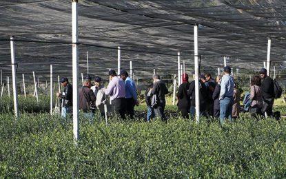 Conférence à Tunis : Idées innovatrices pour améliorer la productivité de l'eau dans l'agriculture