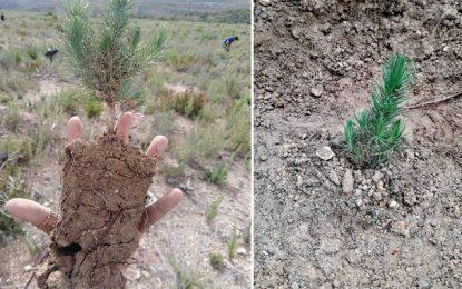 Plantation de 6.600 arbres à Kesra, une action dédiée à la mémoire des victimes de l'accident de Amdoun (Photos)