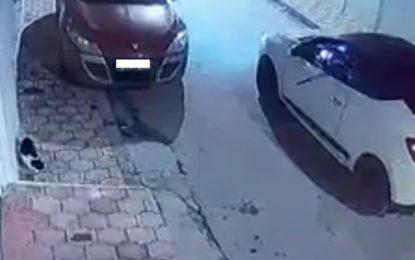 Le tueur des chats à El-Mourouj arrêté : «Je me suis vengé parce qu'ils ont tué mes pigeons», dit-il ! (Vidéo)