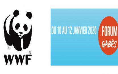 WWF North Africa organise un forum à Gabès sur «L'Economie Bleue»