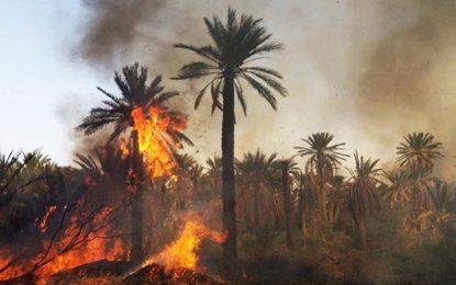 Un feu a pris cet après-midi dans la palmeraie d'El Hamma