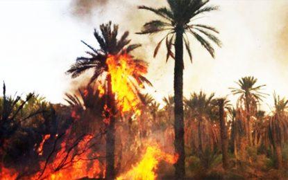 Tunisie: Un incendie s'est déclaré à la vieille oasis de Degueche