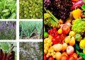 Les plantes et produits végétaux à l'export vers l'UE  soumis à de nouvelles conditions à partir du 14 décembre 2019