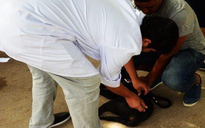 Tunisie : Campagne de vaccination gratuite des chiens contre la rage du 1er janvier au 31 mars 2020