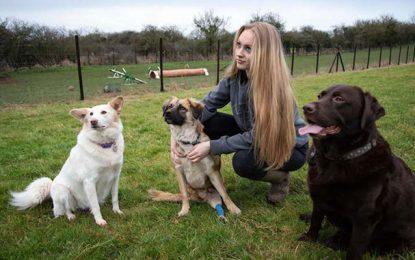 Ollie, un chien errant tunisien, refait sa vie au Royaume-Uni