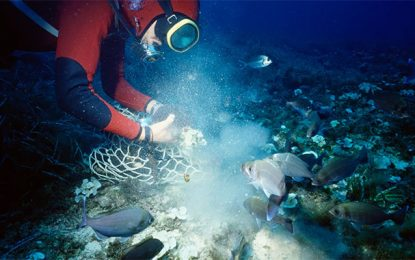 Tunisie-Environnement: L'éponge marine menacée par le réchauffement climatique