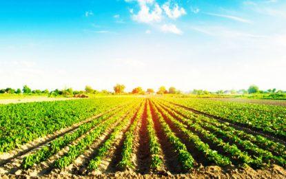Jendouba : des agriculteurs détruisent des champs de légumes