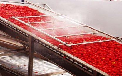 L'Utap invite les industriels à accepter le prix référentiel de 0,218 DT le kg de tomate