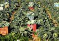 Projet tuniso-italien Refat : l'énergie renouvelable au service de l'agriculture