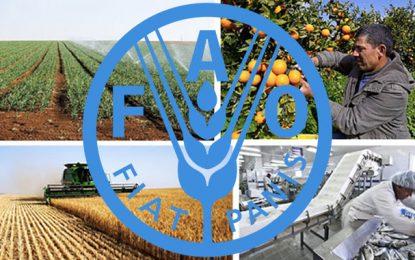 La FAO s'active à augmenter l'investissement agricole en Tunisie