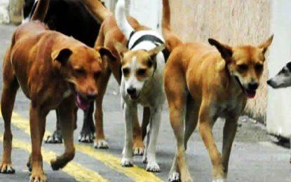 Sidi Bou Said, La Marsa et Carthage s'accordent pour créer un centre commun d'hébergement des chiens errants