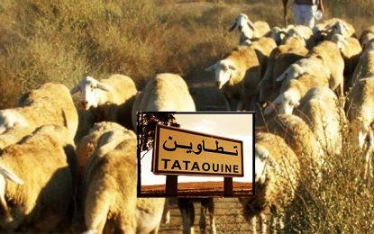 Tataouine : la crise du fourrage menace le bétail