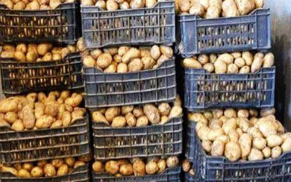 Raoued : Saisie de 5 tonnes de pommes de terre avariées