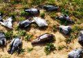 Hammam-Sousse : ce n'est pas la grippe aviaire qui a tué des oiseaux migateurs