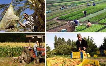 Achèvement de la 1ère phase du 1er recensement général agricole en Tunisie