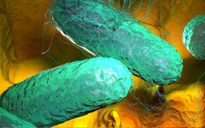 Kébili : Le nombre des contaminés par la fièvre typhoïde continue à augmenter