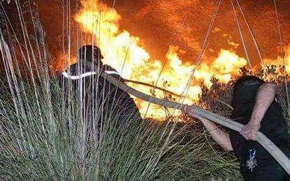 Siliana : Les pompiers poursuivent leurs efforts pour venir à bout de l'incendie