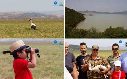 Parc d'Ichkeul : Sauvée et soignée, une cigogne blanche relâchée dans la nature (Photos)