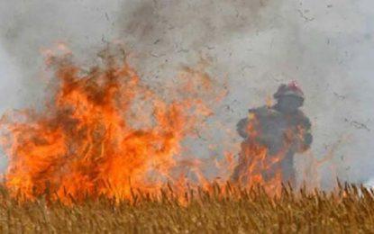 Manouba : Un incendie ravage plus de 9 hectares de blé à Borj El Amri
