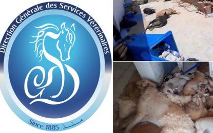 Massacre de chiens à Djerba : La direction générale des services vétérinaires dénonce un crime odieux