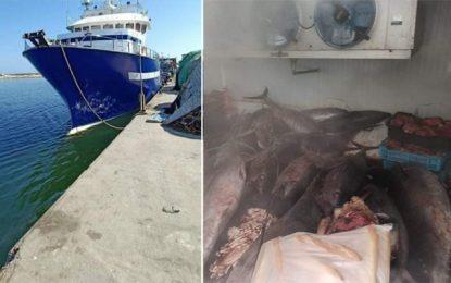 Mahdia : La douane intercepte 6 bateaux étrangers transportant du thon rouge, une espèce menacée d'extinction (Photos)