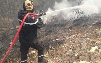 Tunisie : Quarante-deux incendies de forêts en 4 jours