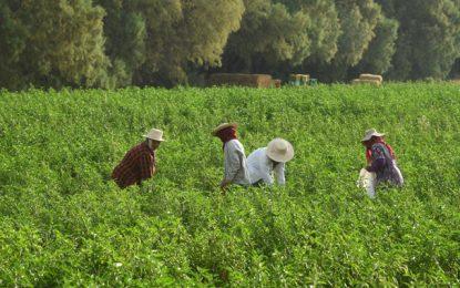 Tunisie : L'UGTT appelle à soutenir les travailleuses domestiques et les ouvrières agricoles