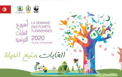 Environnement : Première édition de la Semaine des forêts tunisiennes