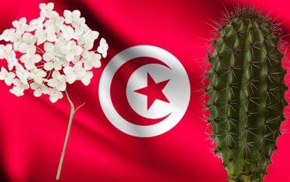 La révolution tunisienne : du jasmin au cactus