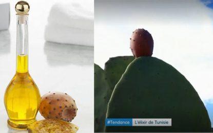 Vendue à mille euro le litre, l'huile de figue de barbarie est le nouvel or du sud tunisien