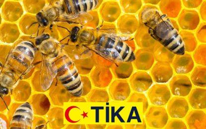 Tika œuvre pour la promotion de la filière apicole au Kef