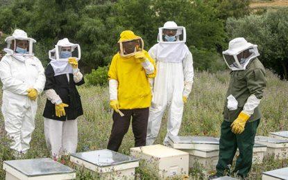 Séminaire de la FAO : L'apiculture au Maghreb sur la voie royale