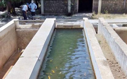 Perspectives prometteuses de l'aquaculture continentale au Maghreb