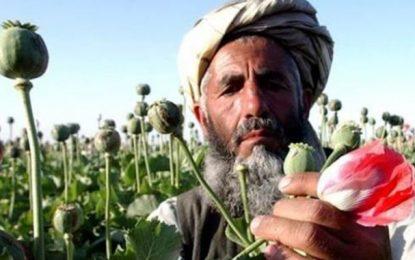 «Appelez les Talibans par leur nom : narcotrafiquants»