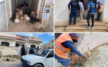 Tunisie : 24 chiens sauvés d'un élevage illégal et insalubre dans une maison à Soliman (Photos)